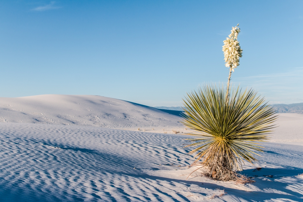 White Sands National Monument, Holloman Air Force Base