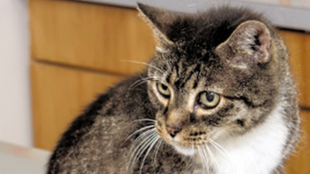 JRB New Orleans_2019 Health Care Pets