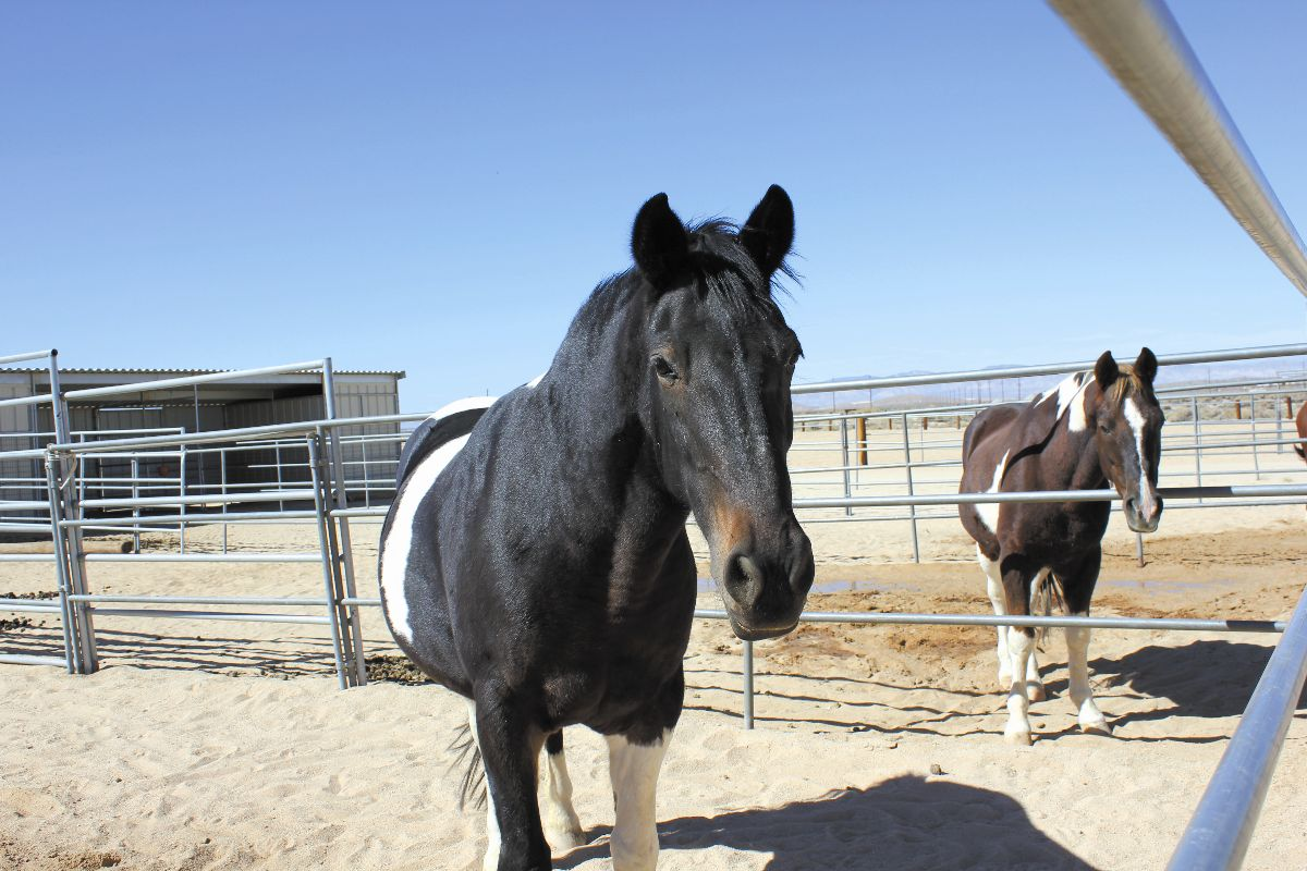 Horse Stables, Edwards Air Force Base Parks and Recreation