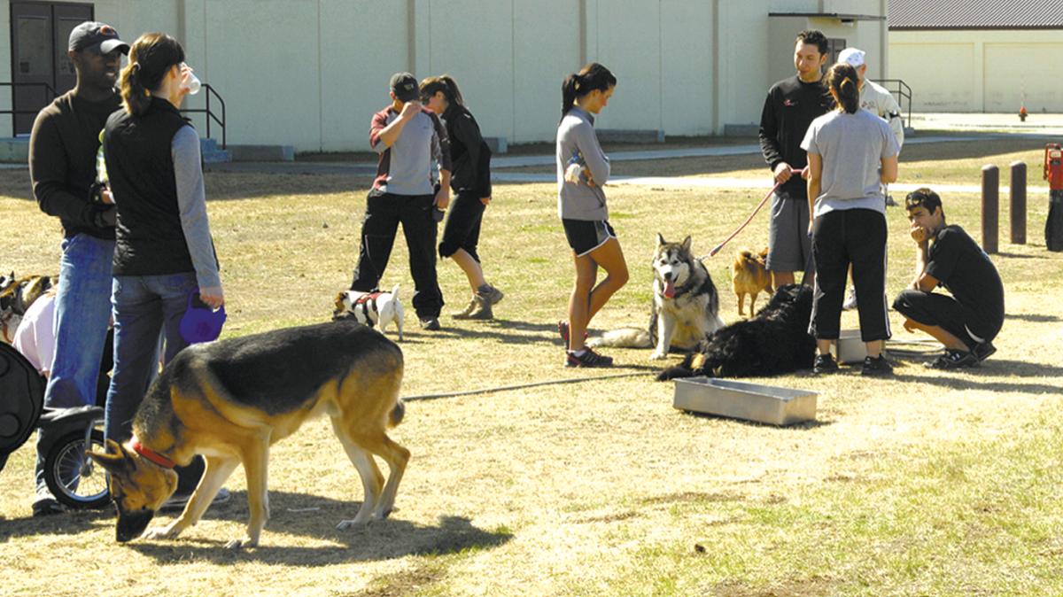 People and dogs at dog park, Joint Base Elmendorf-Richardson, JBER