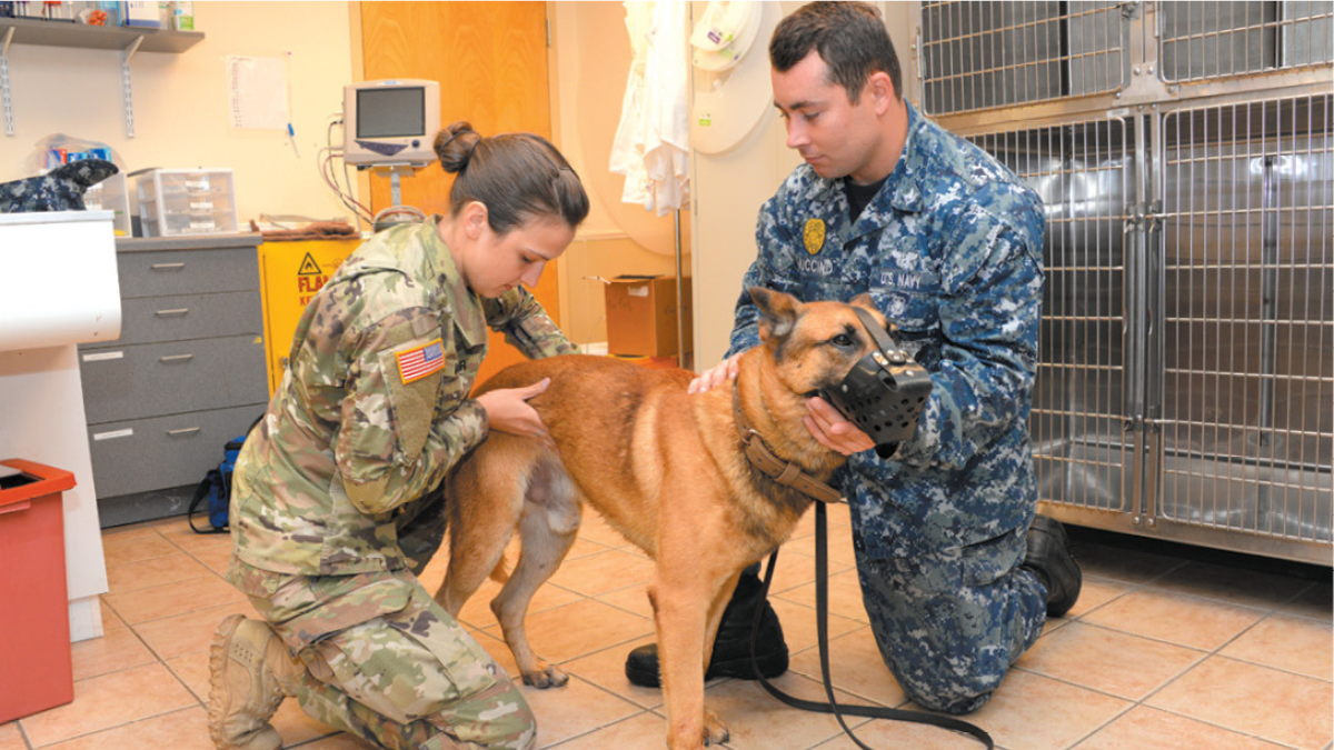 NAS JAcksonville_2019 Support Services Veterinary Treatment Facility