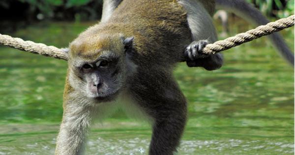 Key West Beyond Key West Monkey Jungle