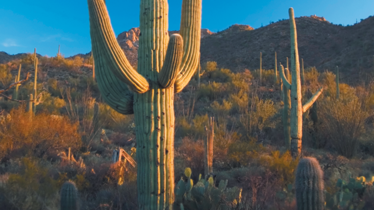 Luke AFB_2019 Area Attractions Attractions