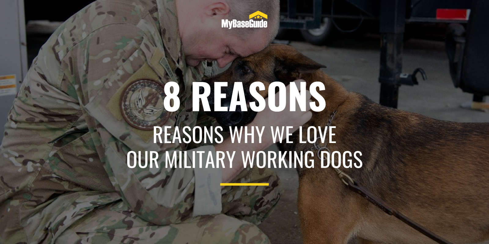 8 Reasons Why Military Love Dogs