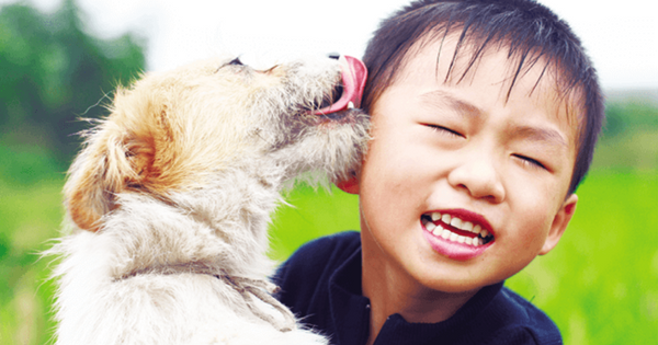 Dover AFB Family Resources Pets - stock photo