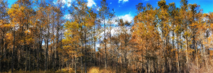 Fort Gordon Weather in the Fall