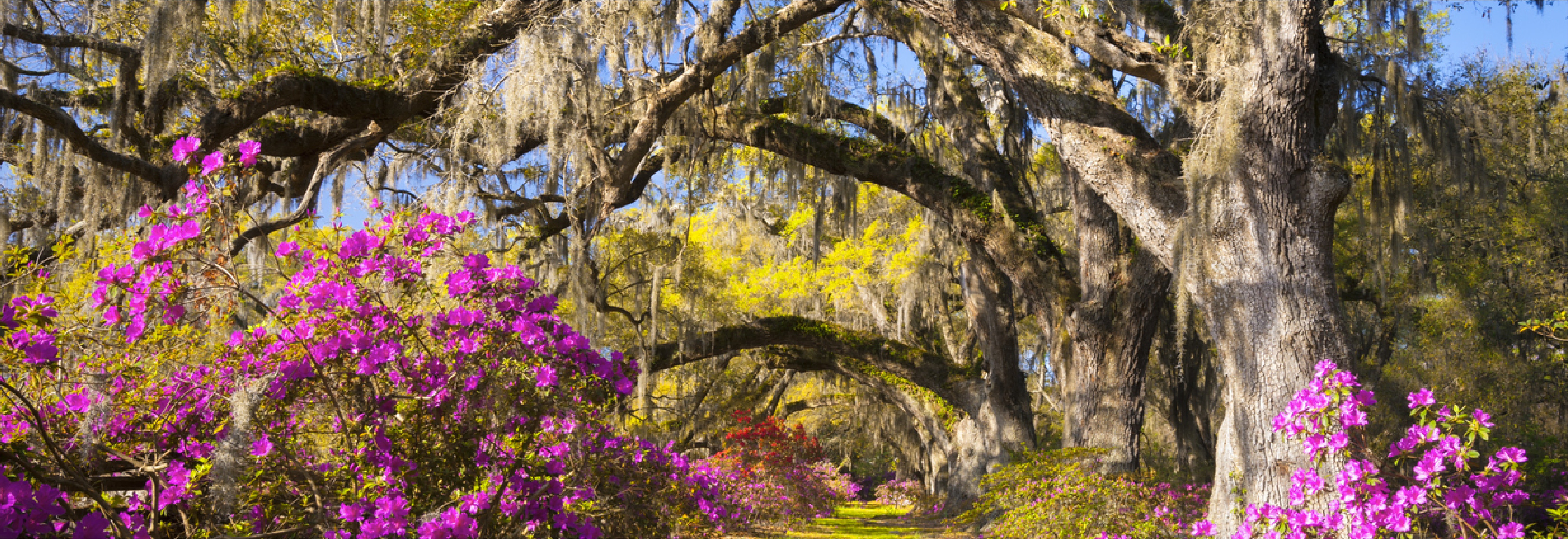 Fort Jackson South Carolina Weather: in the Spring