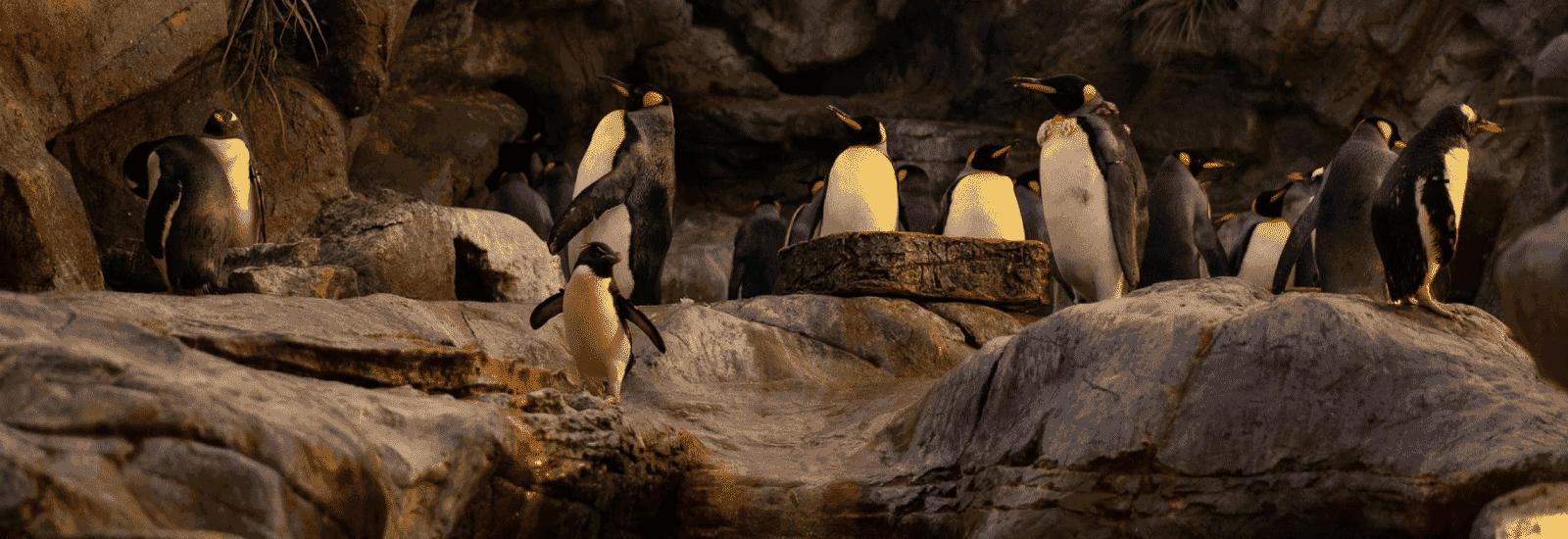 St. Louis Zoo, MO