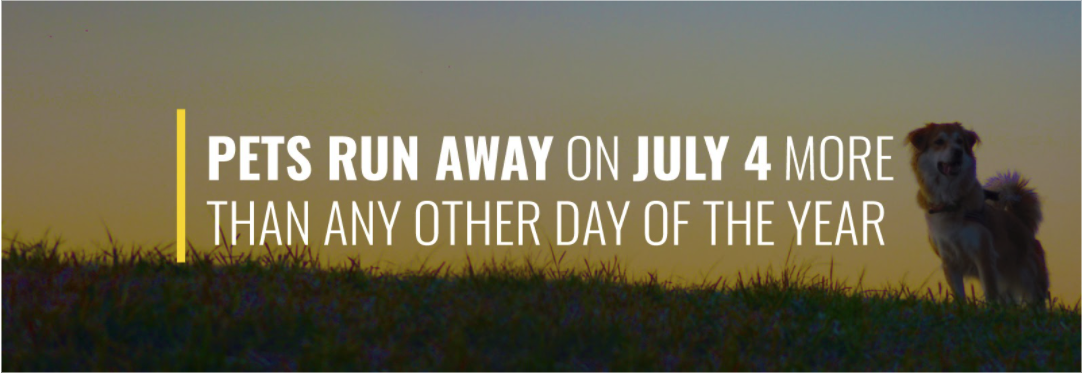 More Pets Run Away on July 4 Than on Any Other Day of the Year